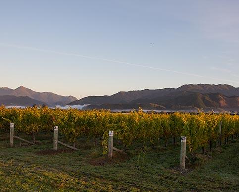 Vins Matua, Nouvelle-Zélande