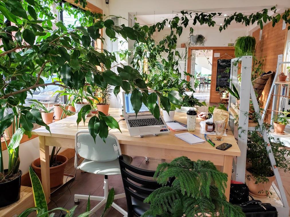 La Classe verte, un espace de co-working tout vert situé au 3801 rue Masson.