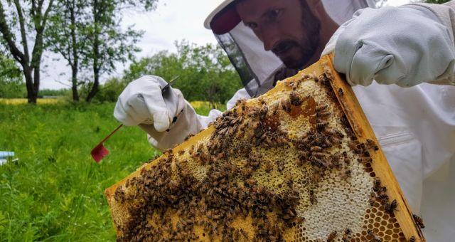 Apiculture, miel, Tingwick, miel de la communauté, abeilles