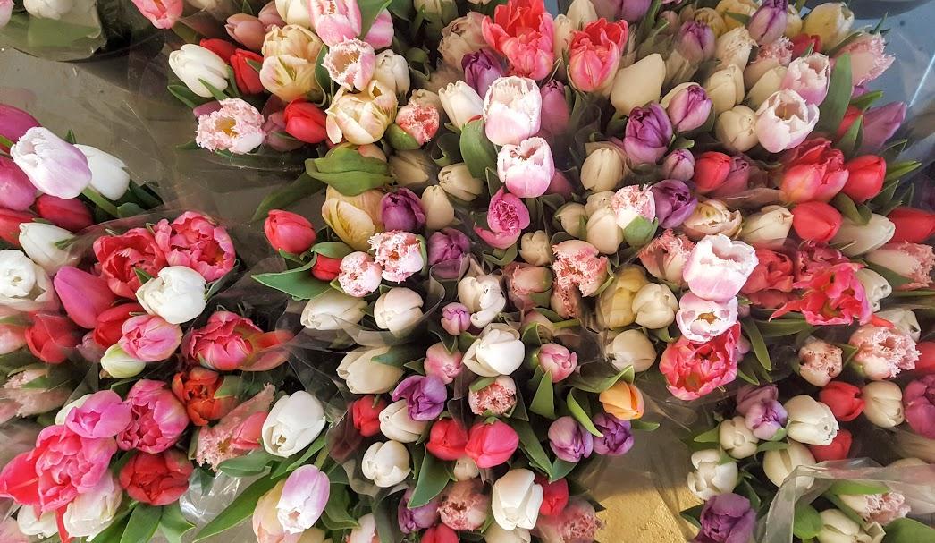 Quoi faire à Laval - Festival des tulipes