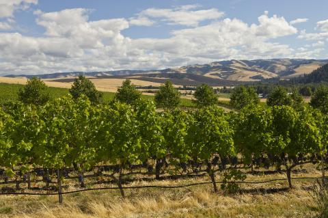 Vins Washington State Wine