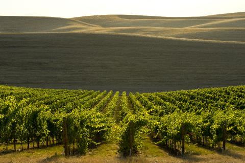 Vins Washington State Wines