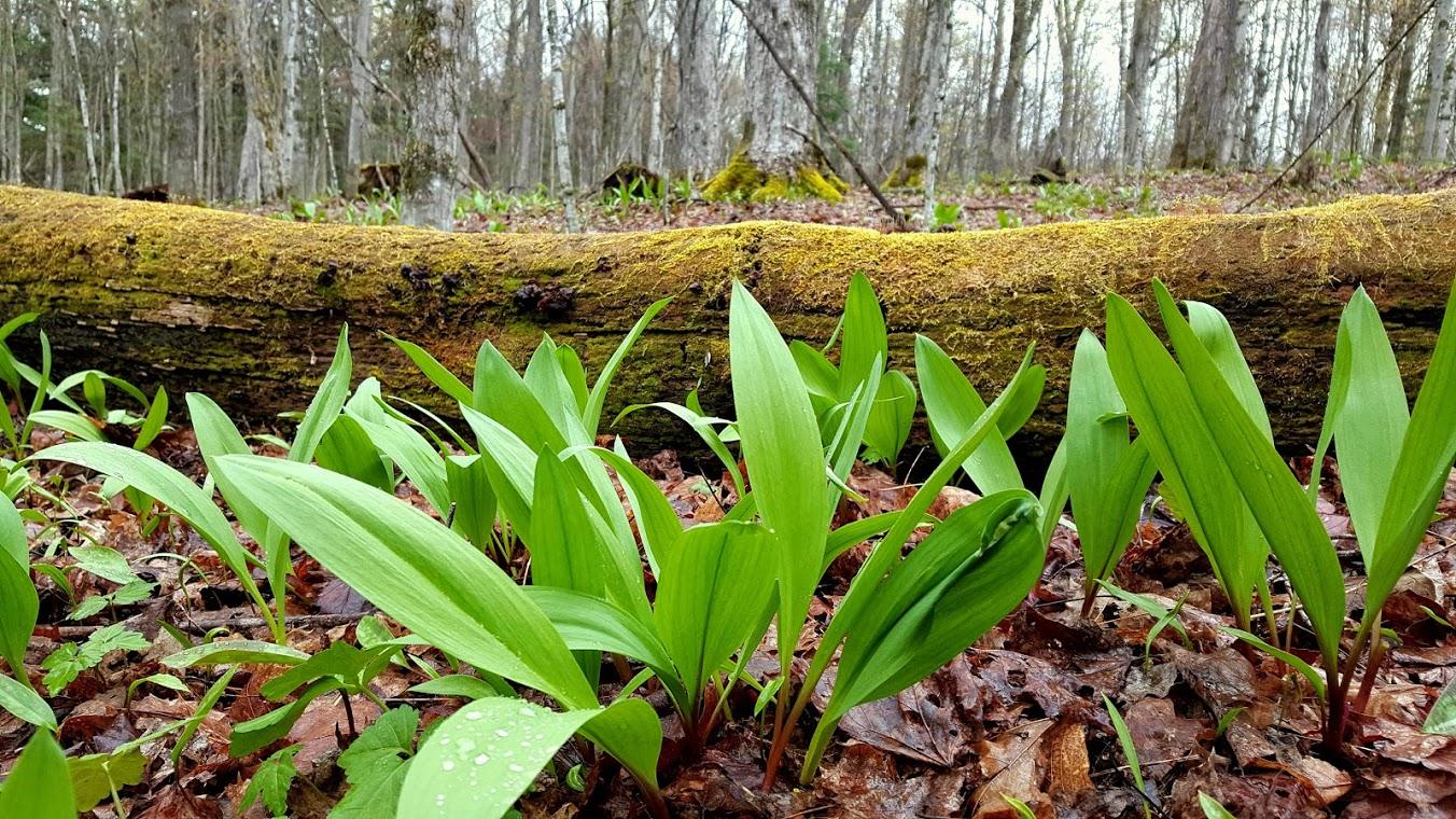 autosuffisance cueillette forêt Le Gal